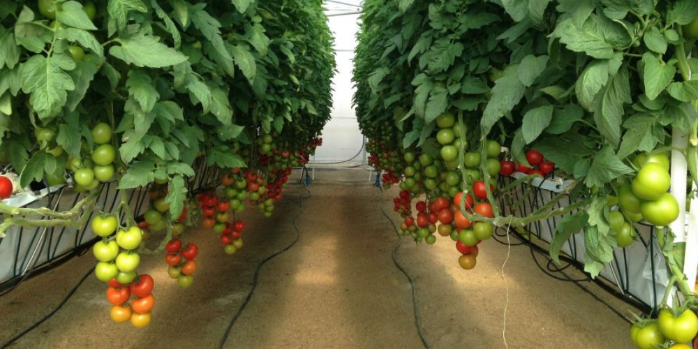 IOT & Agriculture – Implementation of New Agricultural Techniques