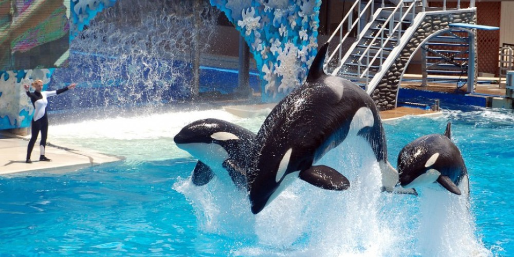Virtual Reality Can Save Killer Whales And SeaWorld
